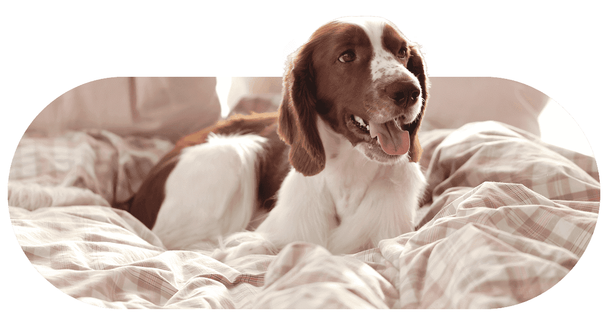 comparador seguro mascota